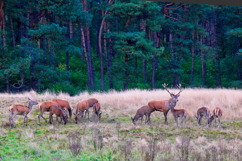Veluwe op stand